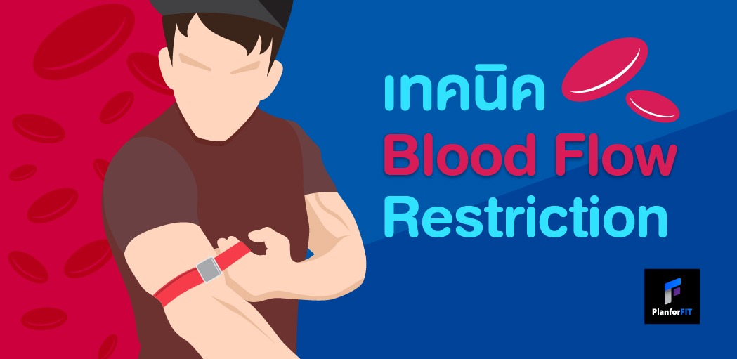 293_bloodflow