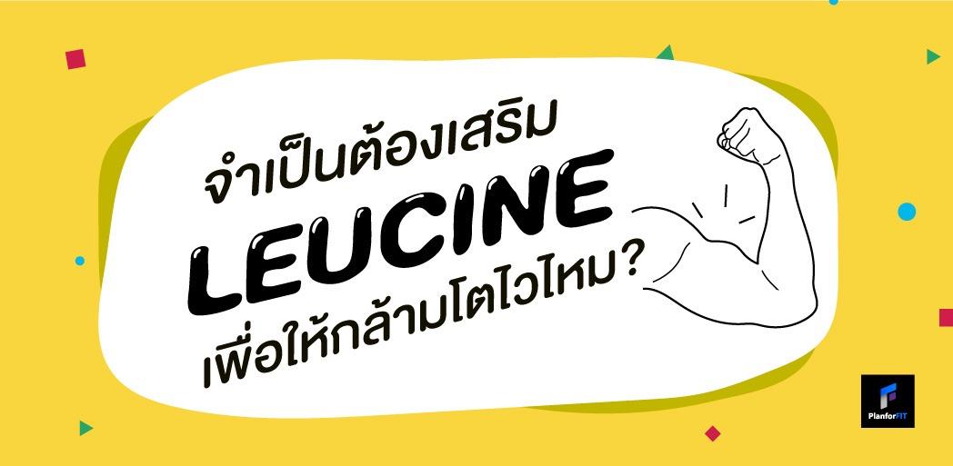 Leucine (BCAAs) ช่วยเพิ่มกล้ามเนื้อได้จริงมั้ย?